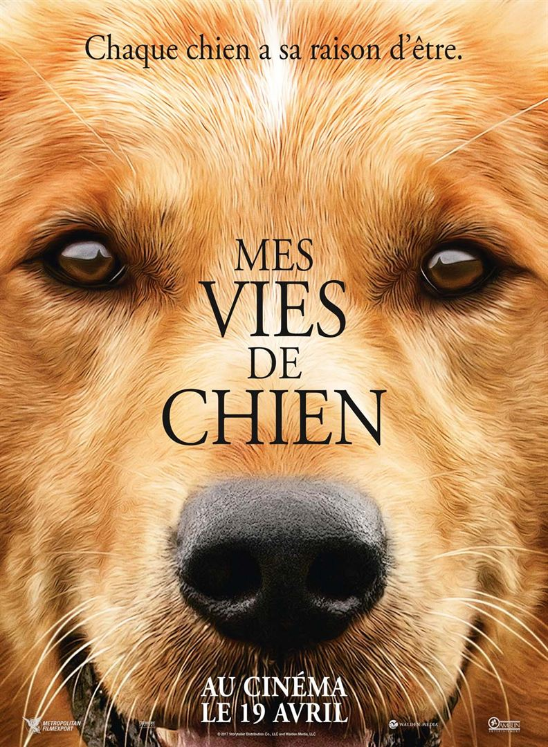 Mes vies de chien » Streaming Film | Streaming Film VF